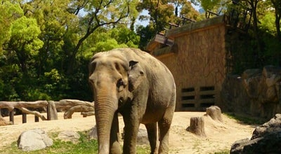 Photo of Zoo 天王寺動物園 (Tennoji Zoo) at 天王寺区茶臼山町1-108, Osaka 543-0063, Japan