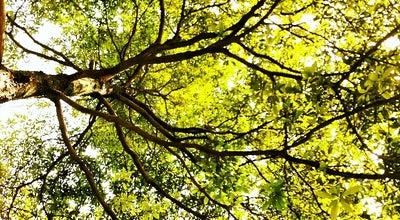 Photo of Arcade 成都市植物园 at 四川省成都市金牛区银杏园路, 成都, 四川 中国, China