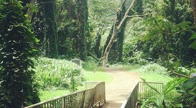Photo of Trail Paradise Park at 3737 Manoa Rd, Honolulu, HI 96822, United States