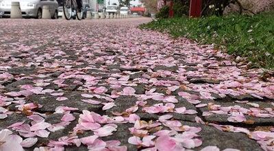 Photo of Lake 弘前城お濠端 at 下白銀町, 弘前市, Japan