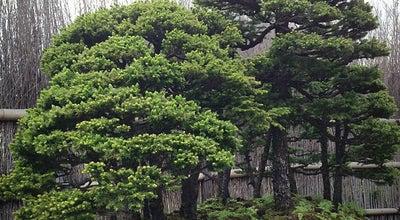 Photo of Art Museum さいたま市大宮盆栽美術館 at 北区土呂町2-24-3, さいたま市 331-0804, Japan