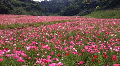 Photo of Park くりはま花の国 at 神明町1, 横須賀市 239-0832, Japan