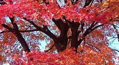 Photo of Park 長四郎公園 at 城東北1丁目, 弘前市, Japan