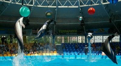 """Photo of Aquarium Дельфинарий """"Немо"""" at Просп. Академіка Глушкова, 9, Київ, Ukraine"""