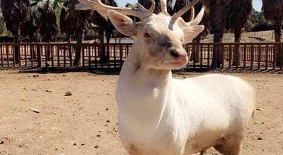 Photo of Zoo Safari Madrid at Aldea del Fresno 28038, Spain