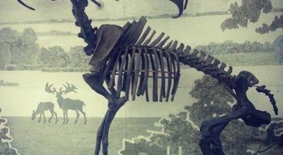 Photo of Science Museum Нацiональний науково-природничий музей at Вул. Богдана Хмельницького, 15, Київ 01030, Ukraine