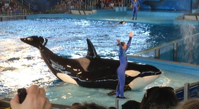 Photo of Theme Park Shamu Theater at 10500 Sea World Dr, San Antonio, TX 78251, United States