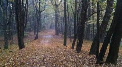 Photo of Trail Rožnik at Cesta Na Rožnik, Ljubljana 1000, Slovenia