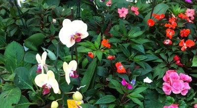 Photo of Botanical Garden Gulistan Botanik at Turkey