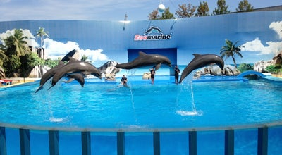 Photo of Zoo Zoomarine Dolphin Stadium at Portugal