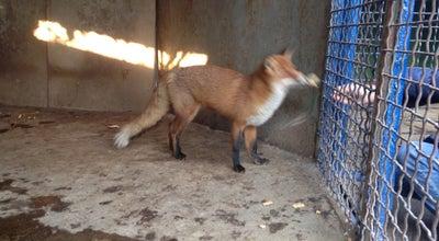 Photo of Zoo Зоопарк Джд at Ukraine