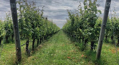 Photo of Winery Shinn Estate Vineyard at 2000 Oregon Rd, Mattituck, NY 11952, United States