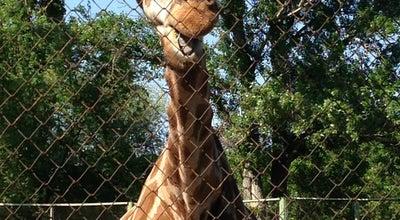 Photo of Zoo Ростовский зоопарк at Ул. Зоологическая, 3, Ростов-на-Дону 344039, Russia