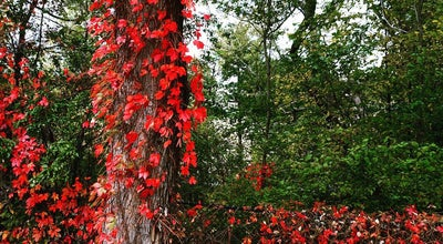 Photo of Park Amory Park at Amory St, Brookline, MA 02446, United States