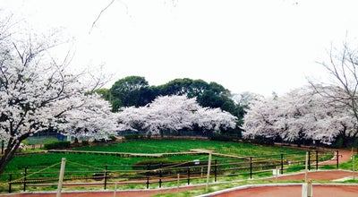 Photo of Park 天神公園 at 天神町, 佐世保, Japan