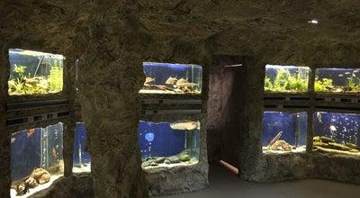Photo of Science Museum Регионален Природонаучен Музей Пловдив (Regional Natural History Museum of Plovdiv) at Ул. Христо Г. Данов 34, Пловдив 4000, Bulgaria