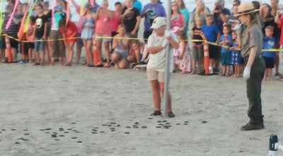 Photo of Beach Sea Turtle Release - Padre Island National Seashore at S Padre Island Dr, Kingsville, TX 78418, United States