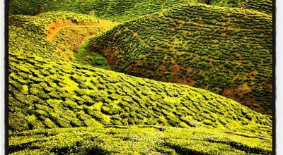 Photo of Cafe Cameron Bharat Tea Valley at Cameron Highlands, Pahang, Malaysia