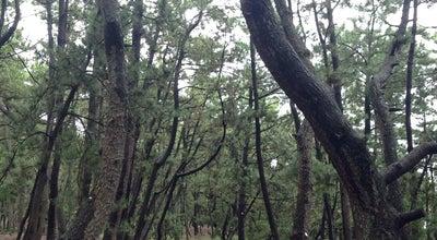 Photo of Trail 羽衣自然遊歩道 at 三保, 静岡市清水区 424-0901, Japan