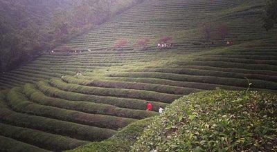 Photo of Farm 대한다원 보성녹차밭 (Boseong Dawon Green Tea Field) at 보성읍 녹차로 763-67, 보성군 546-804, South Korea