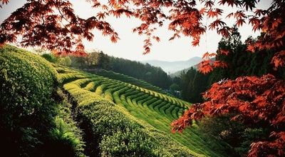 Photo of Farm 대한다원 보성녹차밭 (Boseong Dawon Green Tea Field) at 보성읍 녹차로 763-67, 보성군 546-804, South Korea