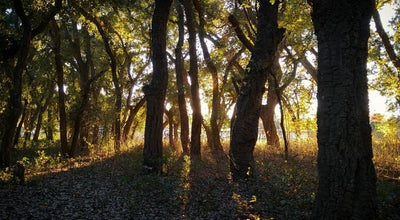 Photo of Trail Cedar Grove Park at 1968 E 8th St, Chico, CA 95928, United States