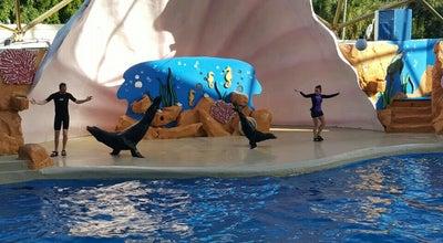 Photo of Aquarium Seal & Sea Lion Feeder Pool at 4400 Rickenbacker Cswy, Key Biscayne, FL 33149, United States