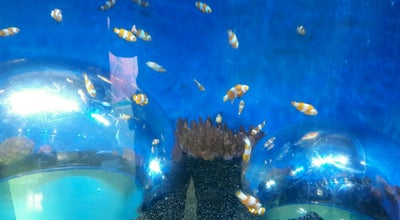 Photo of Zoo SEA LIFE Sanctuary at Southern Promenade, Hunstanton, Norfolk PE36 5BH, United Kingdom
