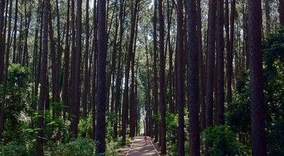 Photo of Park Bosque - UFSM at Ufsm, Brazil