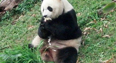 Photo of Zoo Giant Panda House at Smithsonian National Zoo, Washington, DC 20008, United States