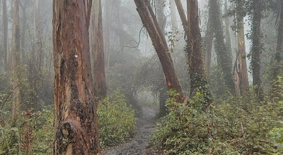Photo of Trail Mount Sutro Summit at San Francisco, CA, United States