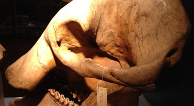 Photo of Tourist Attraction Grant Museum of Zoology at 21 University Street, London WC1E 6DE, United Kingdom