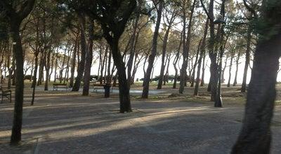 Photo of Beach Pineta di Barcola at Lungomare Benedetto Croce, 3, Trieste 34136, Italy