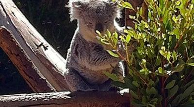 Photo of Zoo Koala Exhibit at 2920 Zoo Dr, San Diego, CA 92101, United States