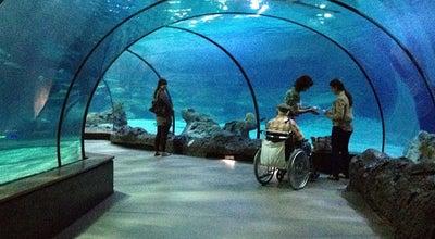 Photo of Aquarium Oceanium at Diergaarde Blijdorp, Rotterdam, Netherlands