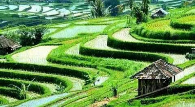 Photo of Scenic Lookout Jatiluwih Rice Field at Jalan Bati Luwih Kawan, Tabanan, Indonesia