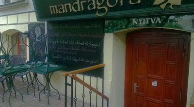 Photo of Cafe Mandragóra Kávéház at Kacsa U. 22, Budapest 1027, Hungary
