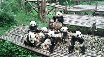 Photo of Zoo 成都大熊猫繁育研究基地 Chengdu Research Base of Giant Panda Breeding at 1375 Xiongmao Ave, Chenghua, Chengdu, Si, China