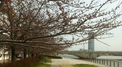 Photo of Park やすらぎ堤 at 萬代橋付近, 新潟市, Japan
