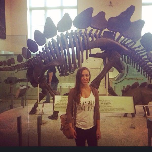 Photo taken at David H. Koch Dinosaur Wing by Teri W. on 6/9/2014