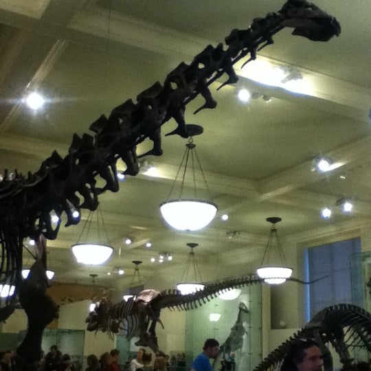 Photo taken at David H. Koch Dinosaur Wing by Monica C. on 11/21/2012