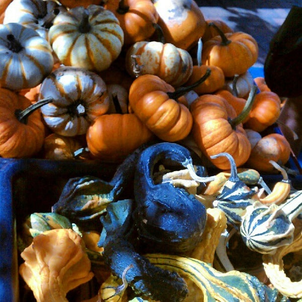Photo taken at Dane County Farmers' Market by Alexandra P. on 9/29/2012