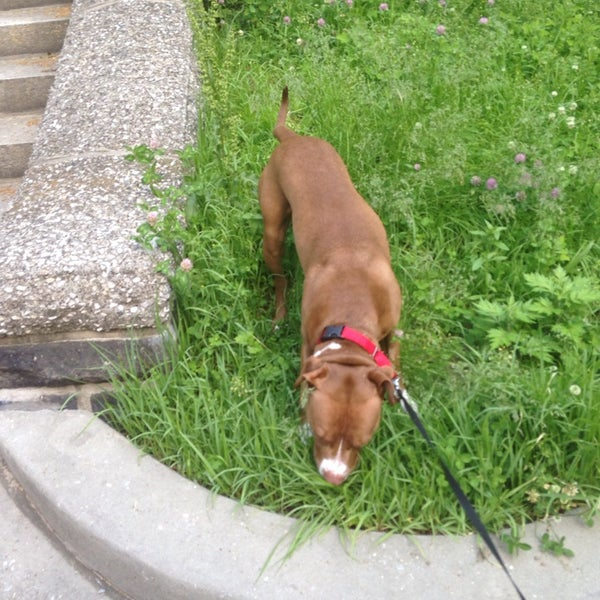 Photo taken at Marcus Garvey Park - Dog Run by Joshua S. on 6/3/2014
