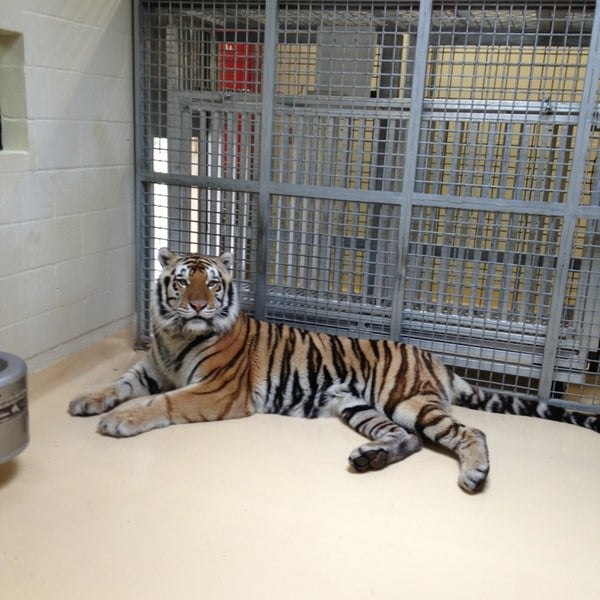 Photo taken at LSU - Mike's Habitat by Sharon W. on 3/22/2013