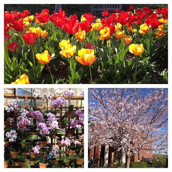 Photo taken at Atlanta Botanical Garden by Jordan K. on 4/1/2013