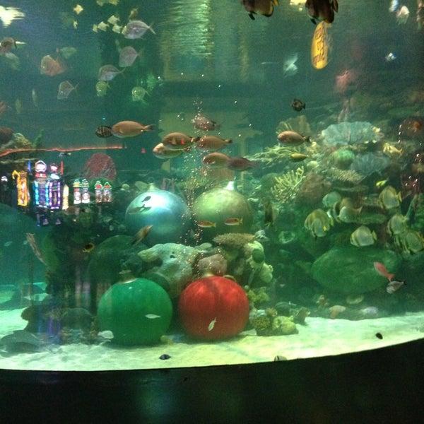 Silverton mermaid tank theme park ride attraction for Mermaid fish tank