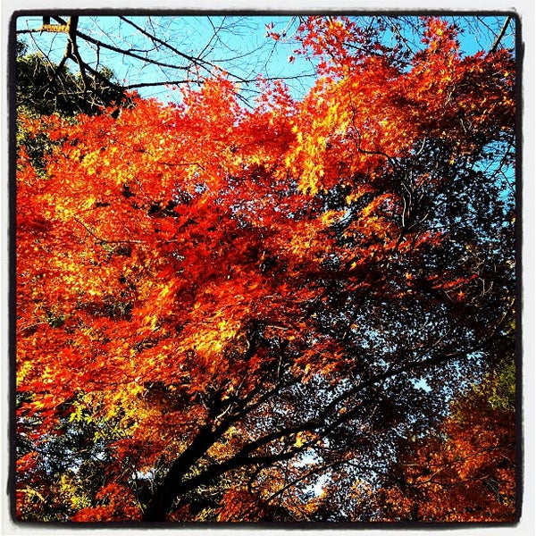 Photo taken at 新宿御苑 (Shinjuku Gyoen) by Irukina on 12/13/2012