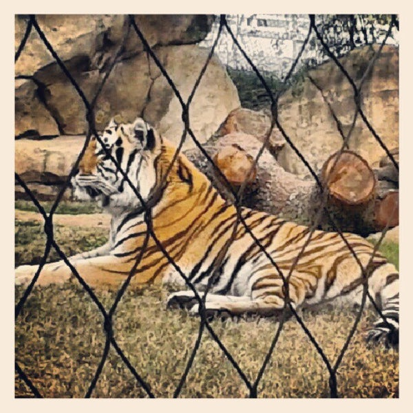 Photo taken at LSU - Mike's Habitat by Katrina W. on 1/19/2013