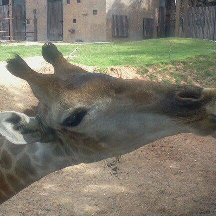 Photo taken at สวนสัตว์เปิดเขาเขียว (Khao Kheow Open Zoo) by Oleksandr K. on 11/16/2012