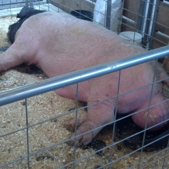 Photo taken at Swine Barn by Tim O. on 8/28/2013